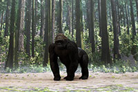 Gorilla Layout sample image for DSF-006N