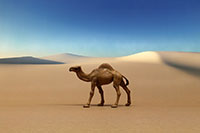 Camel Layout sample image for DSF-006N